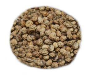 Lichořešnice semeno (čaj lichořeřišnice)