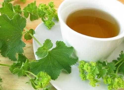 Kontryhelový čaj v těhotenství