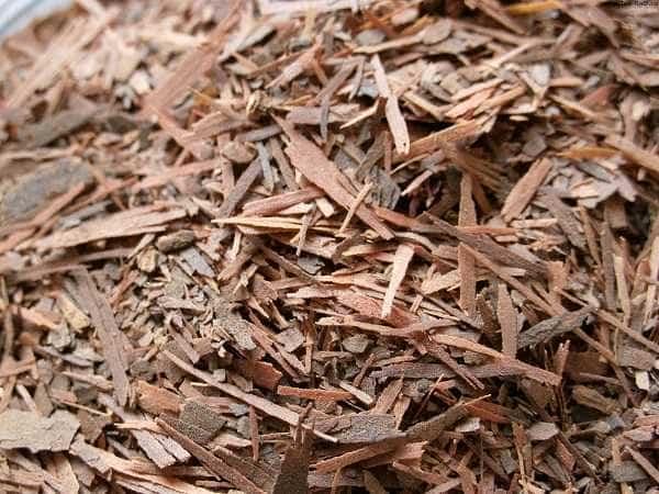 Čaj Lapacho a účinek na organismus