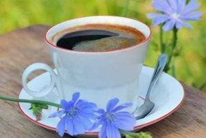 Čekanka káva