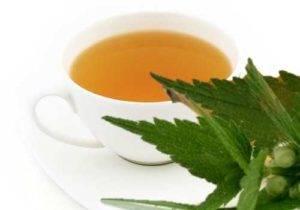 Hluchavka bílá čaj