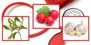 Vysoký krevní tlak bylinky
