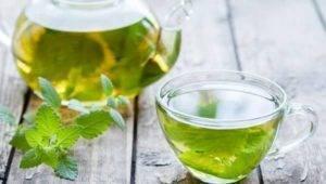 Meduňka čaj účinky