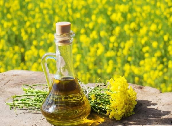 Řepkový olej a zdraví