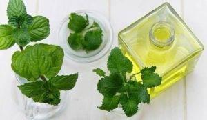 Mátový olej recept