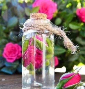 Růžová voda domácí výroba (jak vyrobit růžovou vodu)