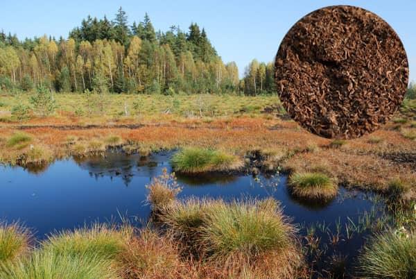 Rašelina účinky (rašelinové koupele, rašelinové zábaly)kou